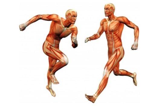 Kenali Cara Gerak Organ Manusia yang Perlu Anda Ketahui