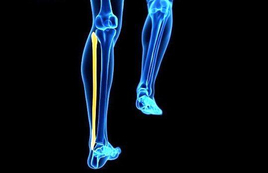 Fungsi Tulang Betis bagi Tubuh Manusia yang Perlu Diketahui
